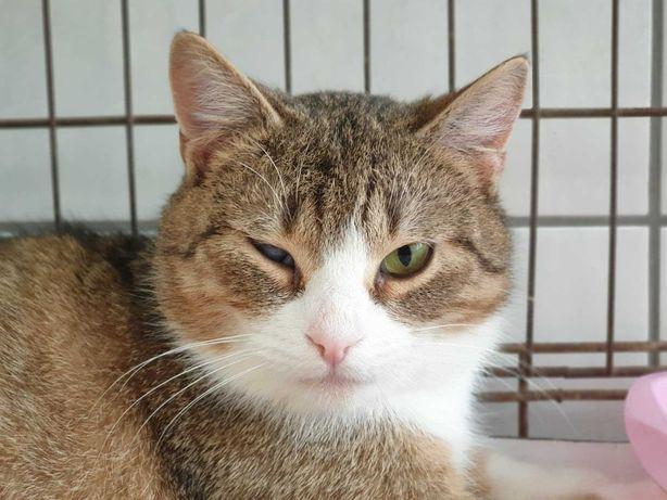 Bourbon - sympatyczny kotek szuka swojego domu!