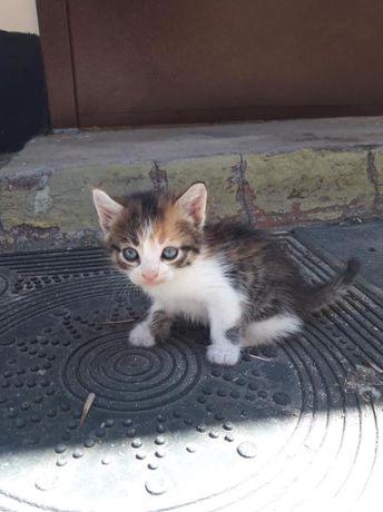 Котенок, котята, кот, кошка