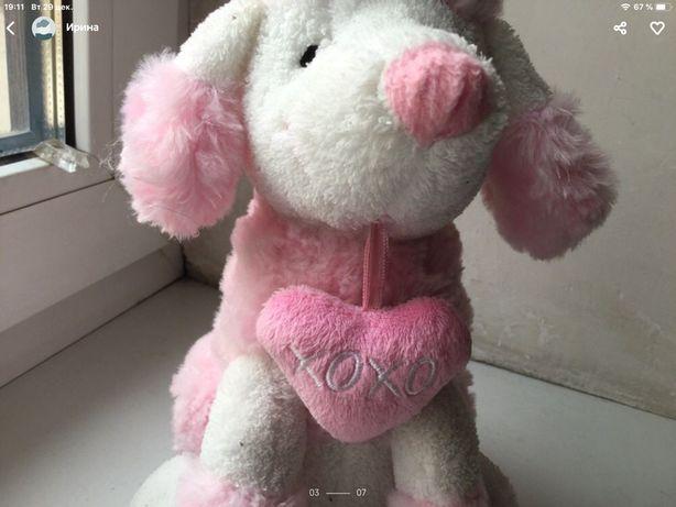 Пудель собака щенок мишка ведмедик слбачка