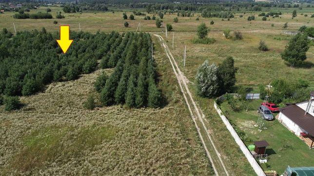 Участок 150 сот Звонковое, Сосны, Река, Электричество