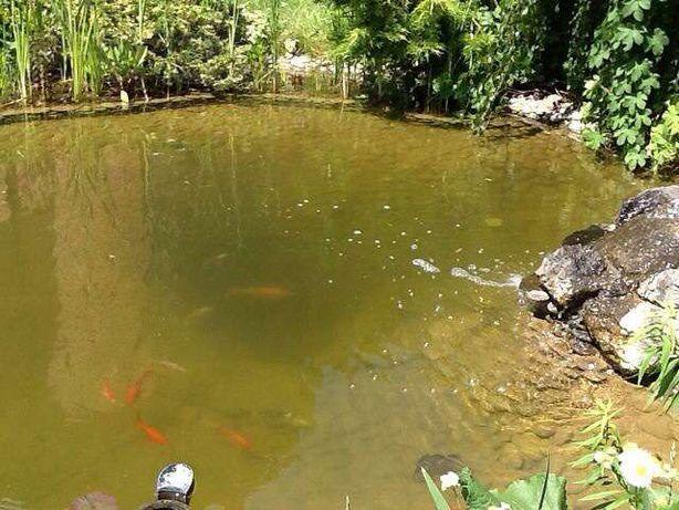 чистка прудов и аквариумов