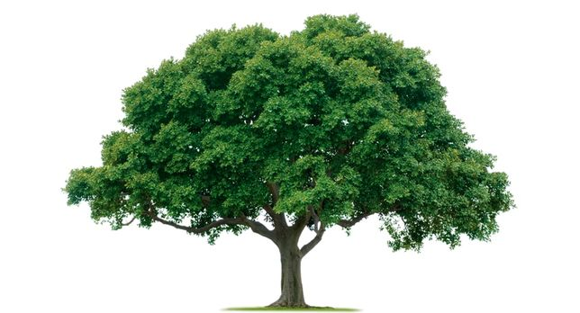 Покупаем Дрова!Любые породы и обьемы,Николаев и область,спил деревьев