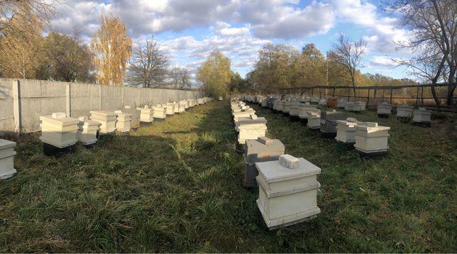 Пчелопакеты семьи карпатка и карника