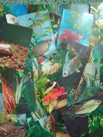 Аквариумные рыбки,С.Кочетов выпуск #1, Москва 1980г, полный набор 25шт