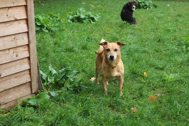 Pulpik - mniejszy psiak szuka domu