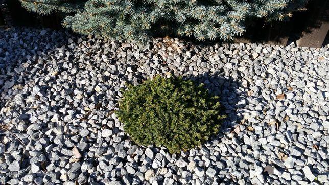Grys Alpejski grafitowy kamień do ogrodu na ogród ogrodowy granitowy