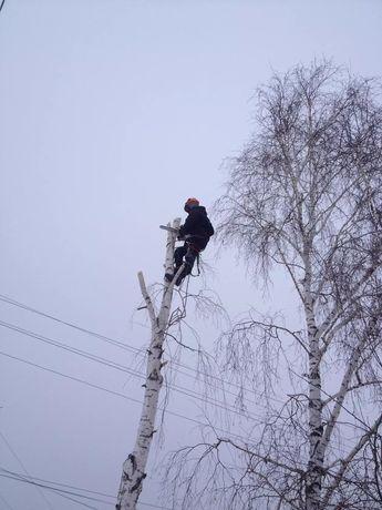 Зрізання дерев арбористика