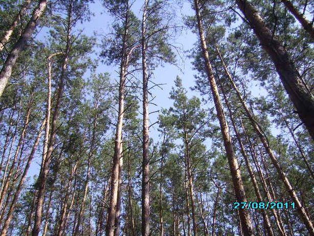 Продажа,обмен участка от 10 соток до 50 соток с.Калиновка ,под лесом