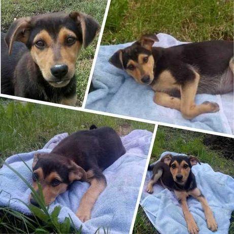 Майя, ласковый щенок, возраст 4 месяца, привита
