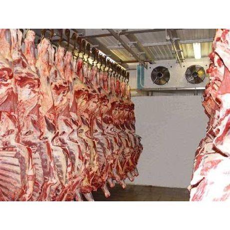 Холодильник для мяса//Охлаждение мяса//Камера для мяса//