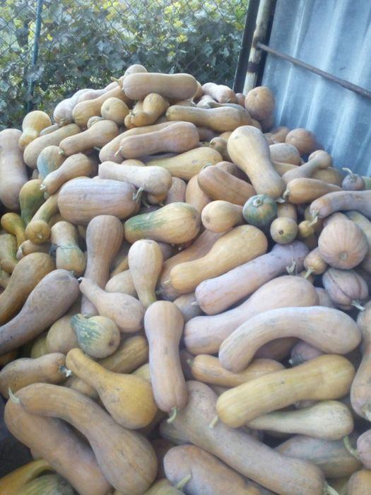 Продам кашные гарбузы Красноград - изображение 1