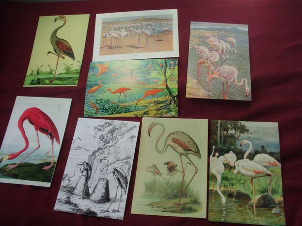 GOŁĘBIE, Flamingi, Papugi reprodukcje XIX w. grafik na ścianę