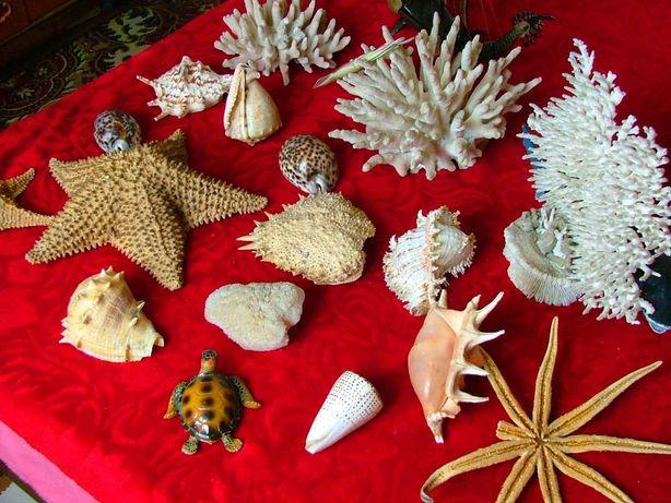 Морские ракушки, кораллы и звёзды на любой вкус!