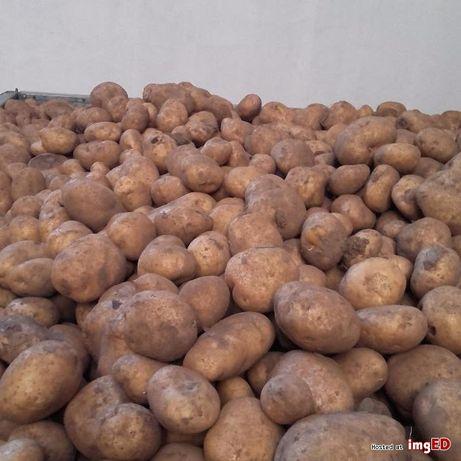 Sprzedam ziemniaki VINETA