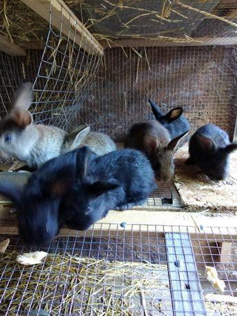 Кролики-самці продам.