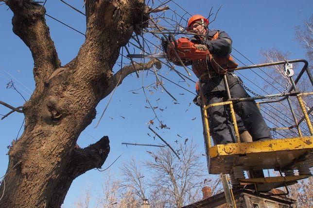 зрізання зрізка дерев. зрізати обрізка спил дерева.розчистка територій