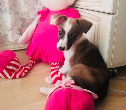 Ищет дом щенок девочка