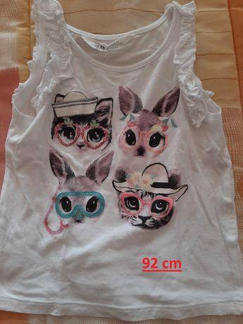 camisola gatinhos