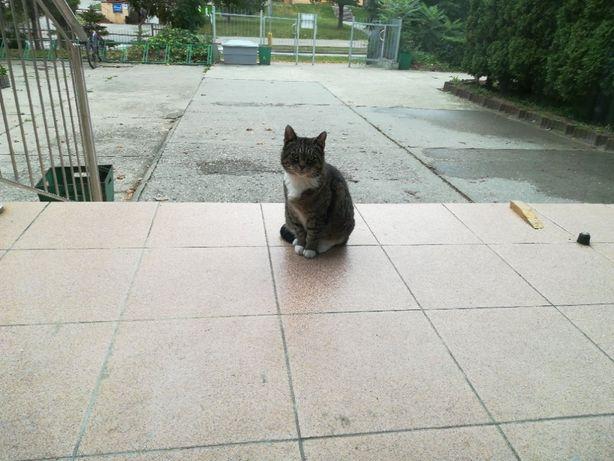 Romeo i Julia - zakochana para bezdomnych kotów potrzebuje bezpiec