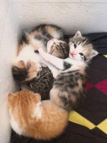 Kolorowe kociaki do oddania