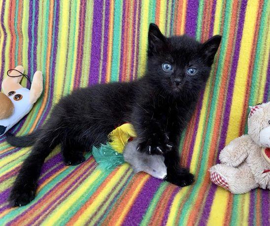 Очаровательный черный котенок отдам
