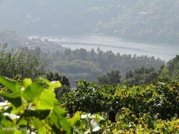 Quinta com vistas para o Douro