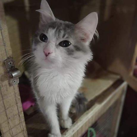 Котику 4 месяца ждёт семью!