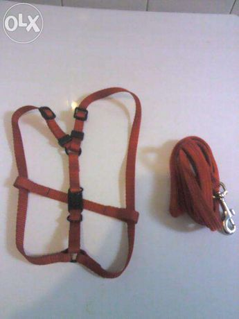 Trela e cinta para raças pequenas ou media/pequenas