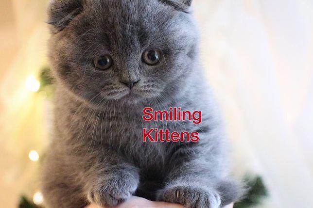 Котята плюшевые как мишутки