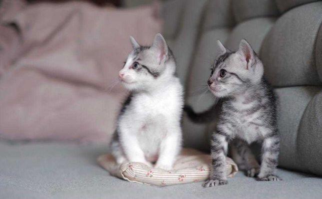 Gatinhos para adopção conjunta