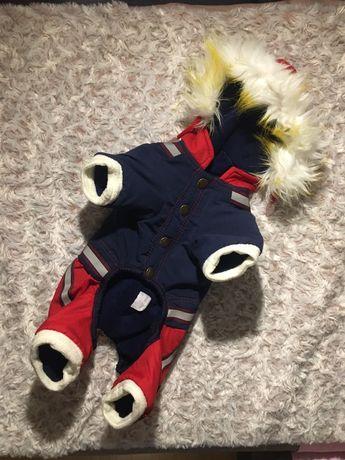 Ubranko dla małego psa z odblaskiem