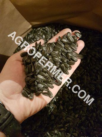 Семена подсолнечника гибридов VIKING, LEBRON, MADOC и FORK
