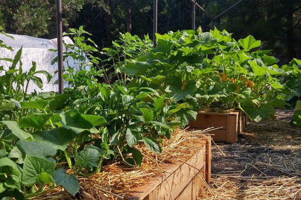 Serviços em agricultura natural,manutenção e criação de hortas...