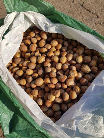 продам горіх лісовий , ліщину, грецький горіх