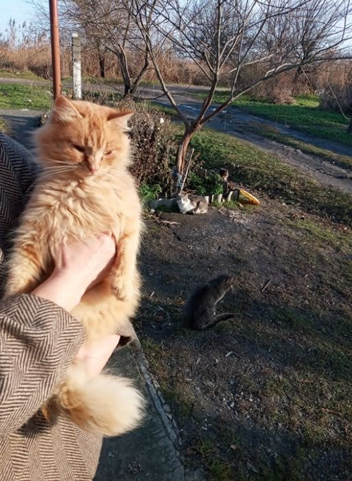 Молодому котику подростку нужен дом Бердянск - изображение 1