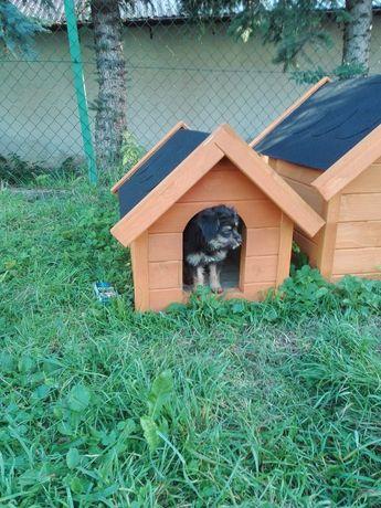 Buda dla małego psa rozmiar S kojec boks klatka dla psa tanio!