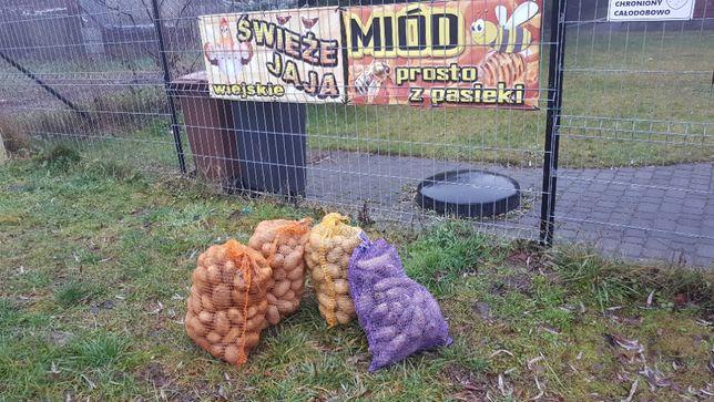 ziemniaki, buraki ćwikłowe, marchew, prosto od rolnika