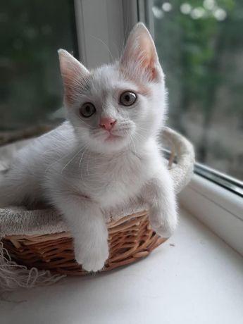 Отдадим котёнка в хорошие руки