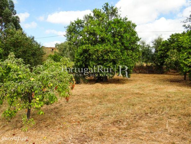 Quintinha com ruína e árvores de fruto, totalmente murada