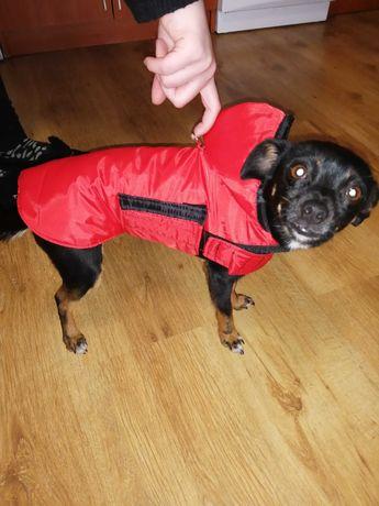 Ubranko dla psa na wymiar