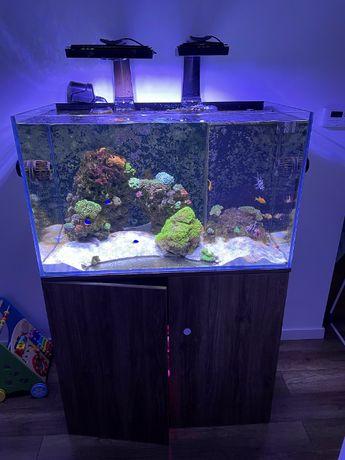 Akwarium morskie 100x60x55 cm z życiem i osprzętem