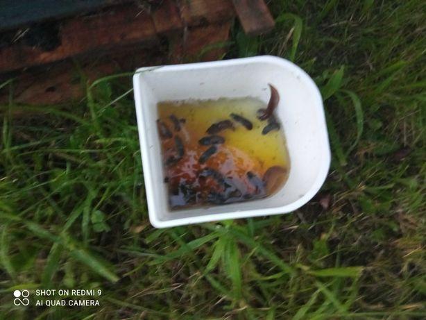 Pułapki na ślimaki,ekologiczne,naturalne,pojemniki