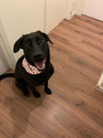 Cadela para adopção