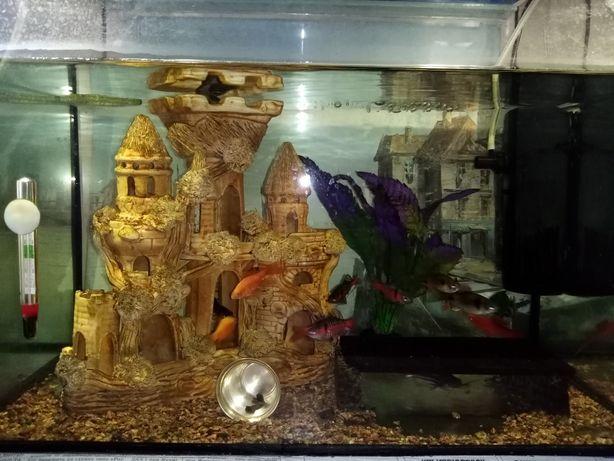 Акваріум, рибки, замок, компресор