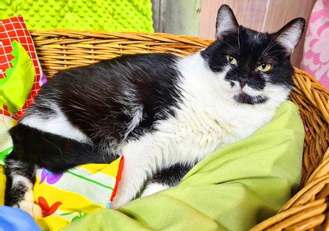 Чарівна ніжна чорно-біла красуня кішечка Бьянка, кішка, киця, 1 р