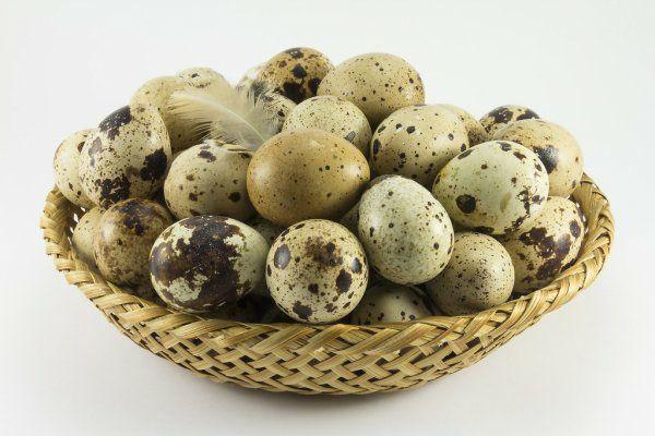 Ovos frescos de codorniz