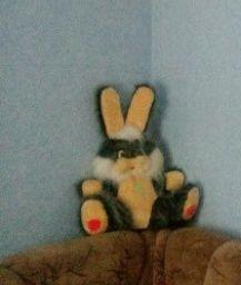 Продам зайця