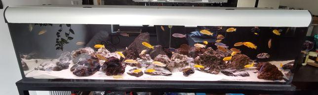 Akwarium, pyszczaki 190x60x50, fx6, eheim, aquaell