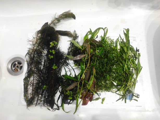 Roślinki akwariowe