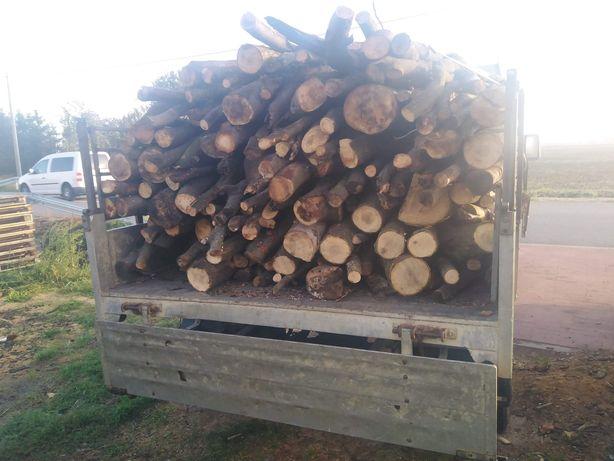 Drewno opałowe - Topola